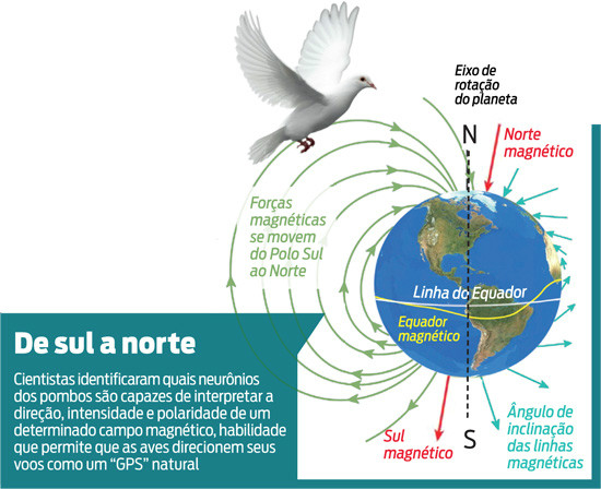 GPS do pombos