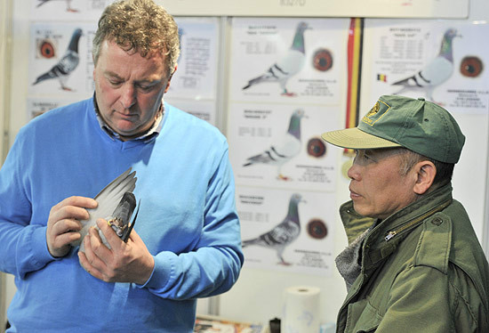 Homem analisando pombo