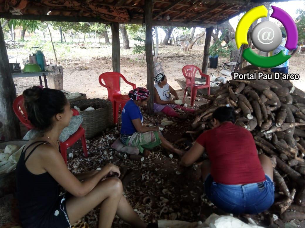 Fabricação de farinha de mandioca em Pau D'arco do Piauí