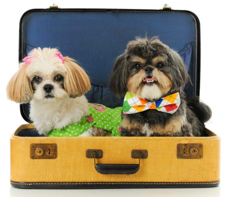 Transporte de animais em Cias aéreas