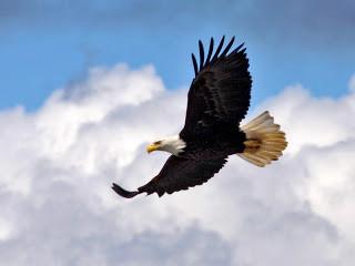 Voam como a águia (Isaías 40:30-31)