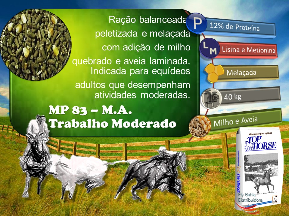 MP 83 M.A.