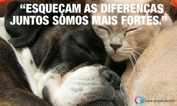 Esqueçam as diferenças. Juntos somos mais fortes.