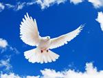 https://img.comunidades.net/igr/igrejaguardadeisrael/igrejapombinhabrancafundoazulFAVICOM150X150.png