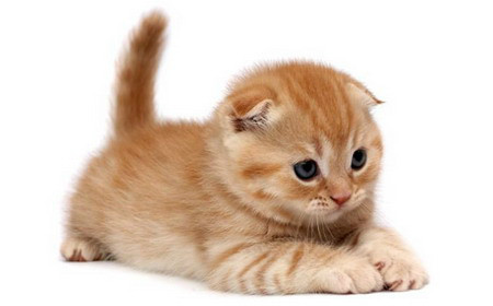 Lindos Gatos filhote