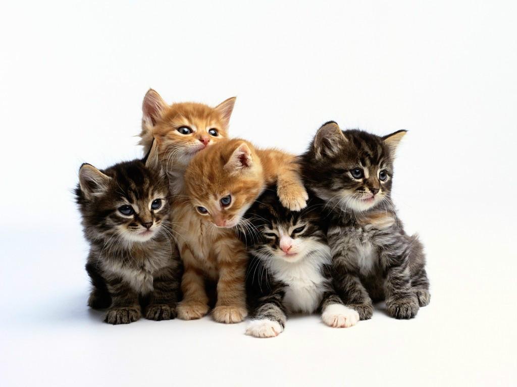 Lindos Gatos filhotes