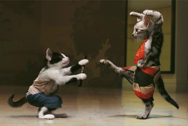 lindos gatos, Gatos Engraçados