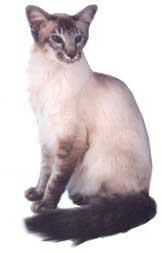 lindos gatos Balines