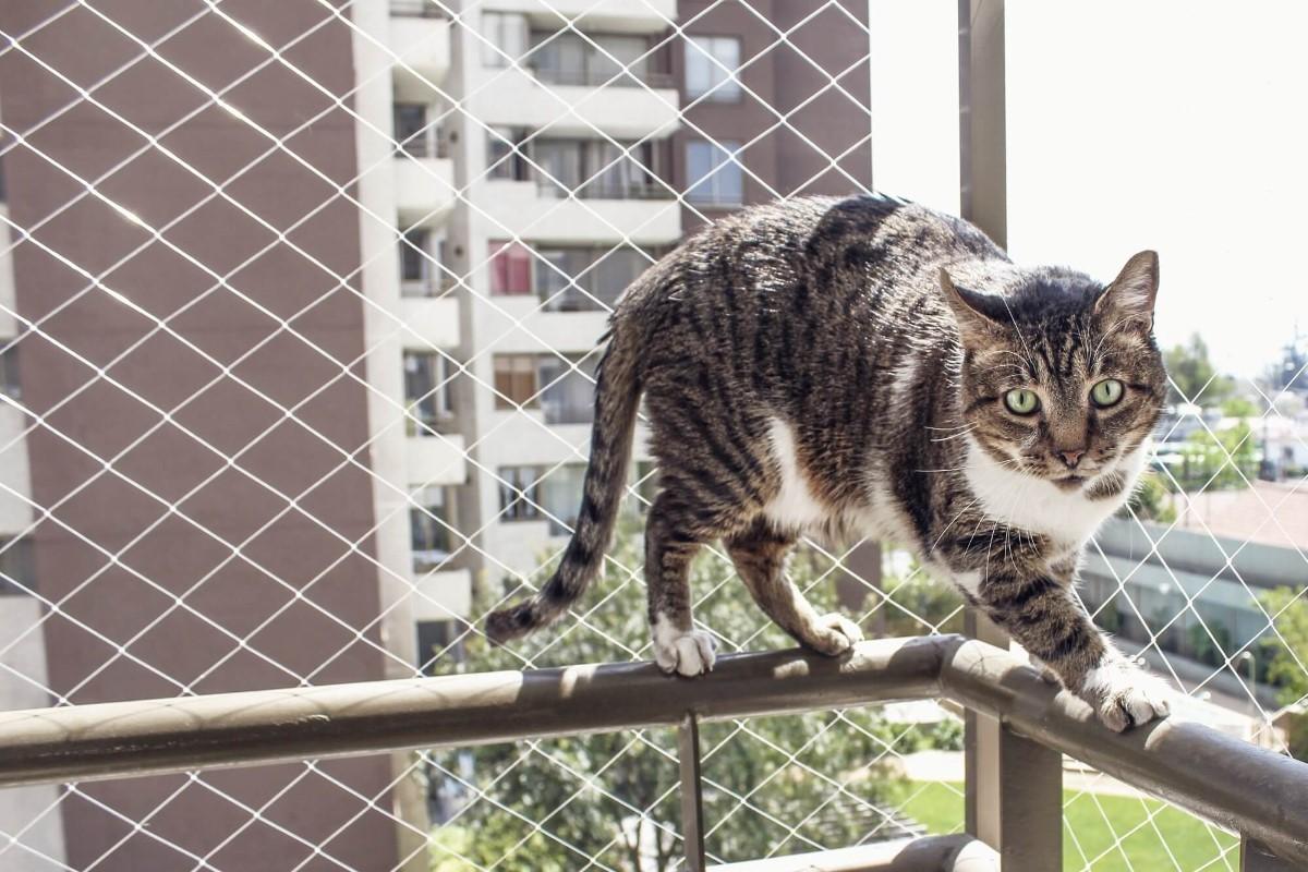 Telas de proteção para animais de estimação