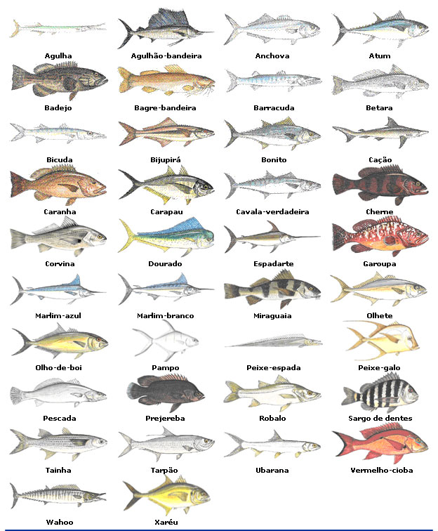 Peixes agua salgada