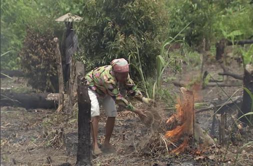 Abertura de clareira para a prática agrícola em Moçambique.