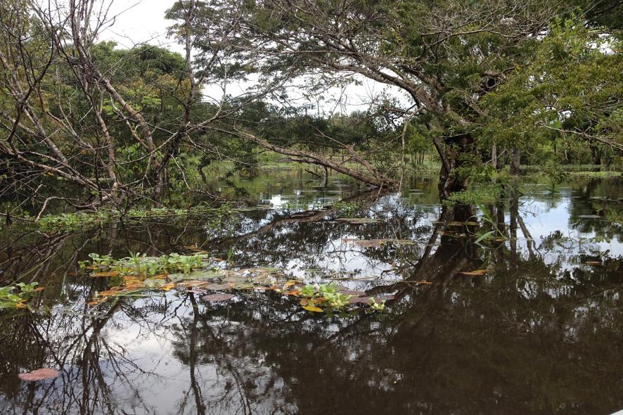Floresta Amazónica, Brasil.