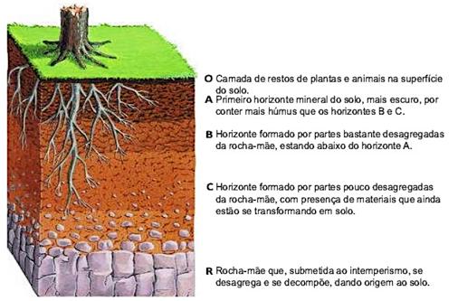 Horizontes do solo.