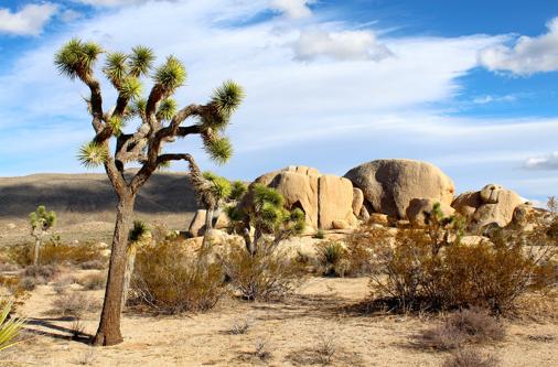 Parque Nacional Joshua Tree na Califórnia, EUA.