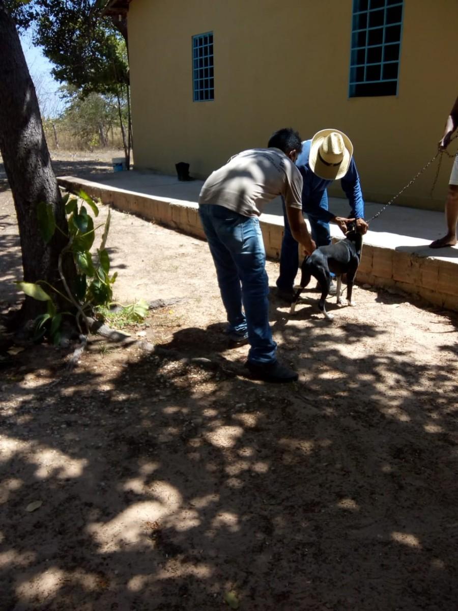 Secretaria Municipal de Saúde de Pau D'arco do Piauí, dar continuidade a campanha de vacinação antirrábica