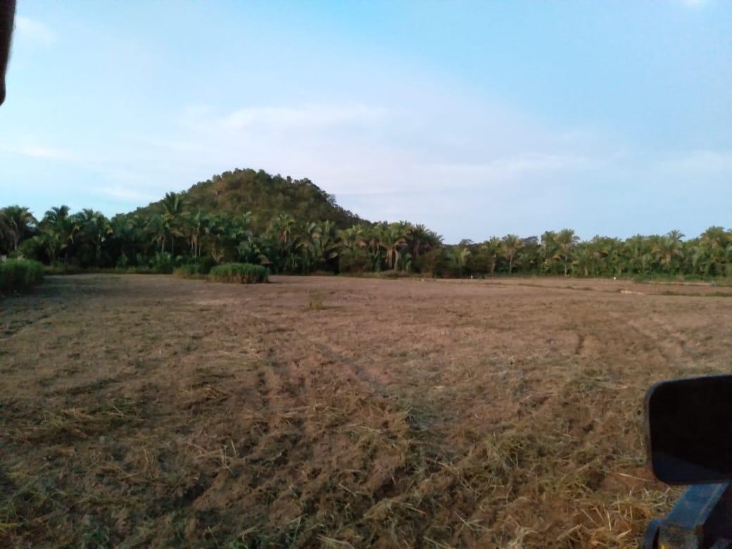 Prefeitura realiza serviço de arado para agricultores de Pau D'arco do Piauí