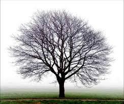 Imagem árvore