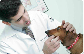 Dr Herbert