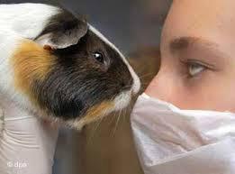 experimento com animais