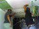 www.sianon.com.br/forroacustico