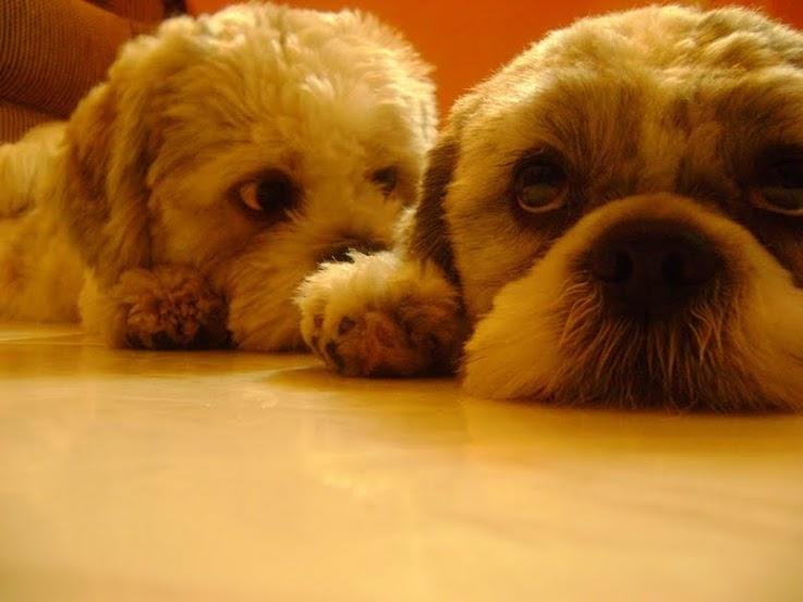 Baixar Livro Adestrador Amigo Adestramento De Cães Download Ebook