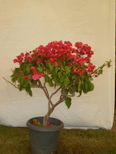 Mudas, Plantas, Flores Ornamentais Em Campinas