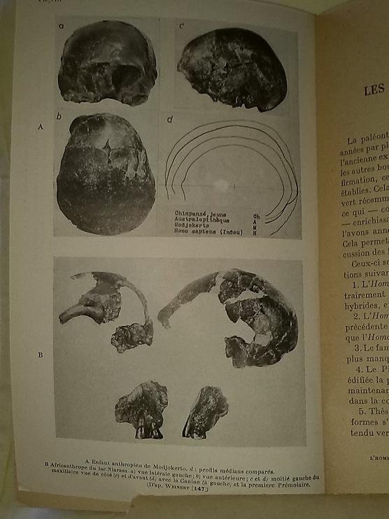 L'Homme Préhistorique et les Pré-humains.